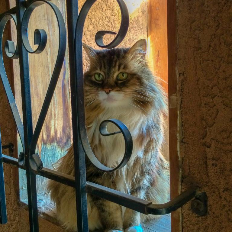 Kitty Behind Bars